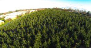 Juletræes plantage set fra oven