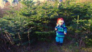 dreng ved fæld selv juletræ