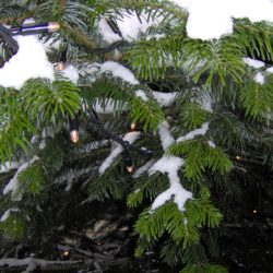 Juletræ med sne og lyskæde