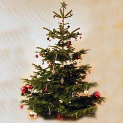 Juletræ med smuk pynt